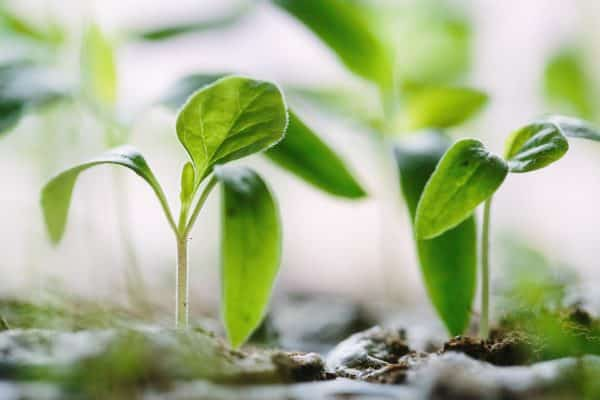 8 Proven Ways To Grow In Your Faith